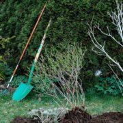 Garten- und Landschaftsbau